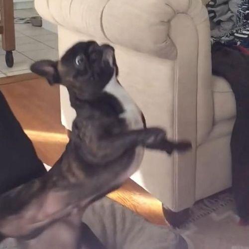犬のジャンプ失敗08
