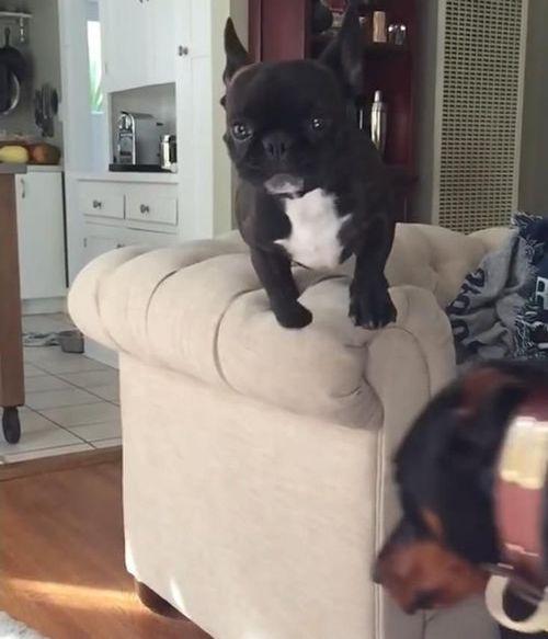 犬のジャンプ失敗02