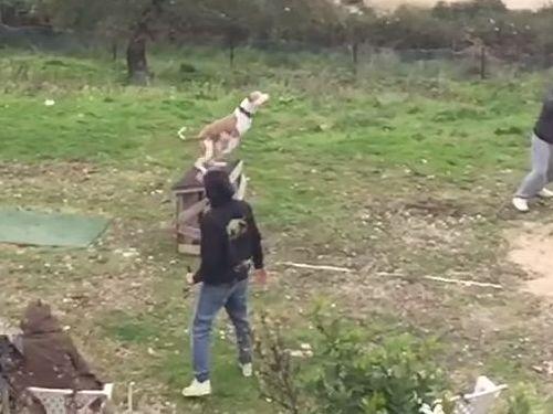 訓練された犬のジャンプ力01