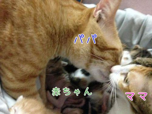 家族愛の強いパパ猫00