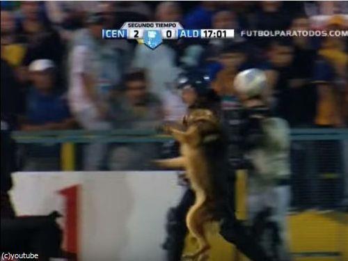 サッカーと警察犬04
