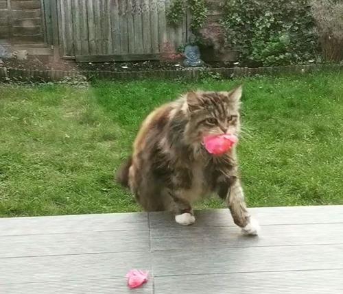 花を差し入れする猫00