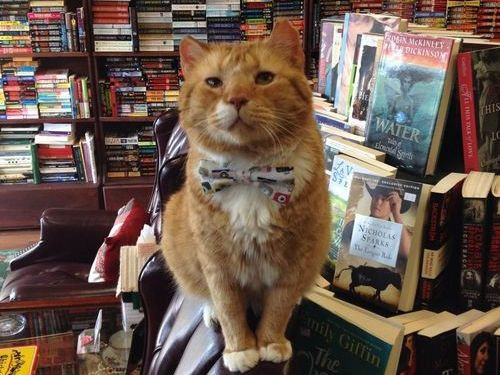 本屋の猫00
