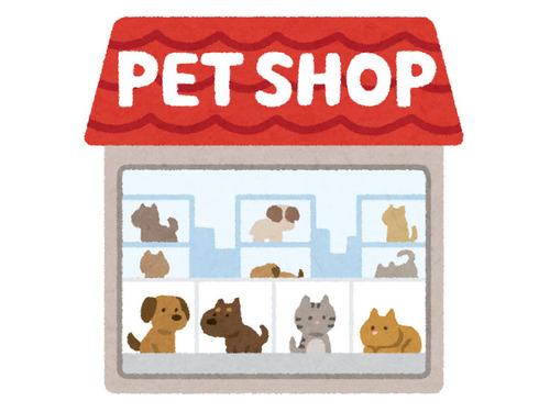 イギリスのペットショップで子犬と子猫の販売禁止