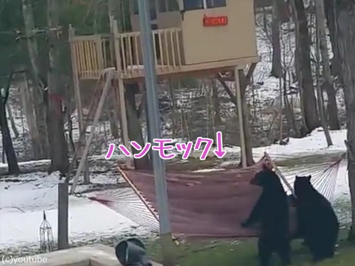 熊にハンモックは難しい00