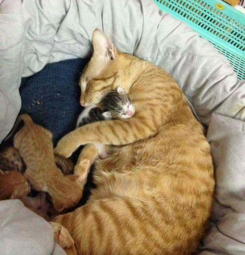 家族愛の強いパパ猫05