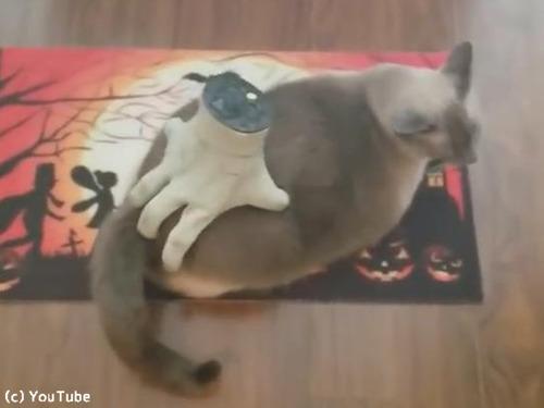 ハロウィンのおもちゃを気にいっちゃった猫00