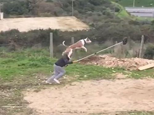 訓練された犬のジャンプ力05
