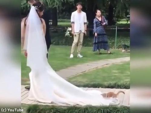 結婚式にキュートなお客さん00