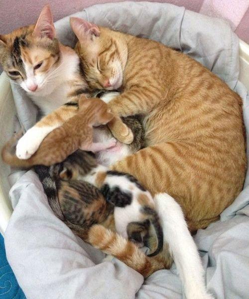 家族愛の強いパパ猫08