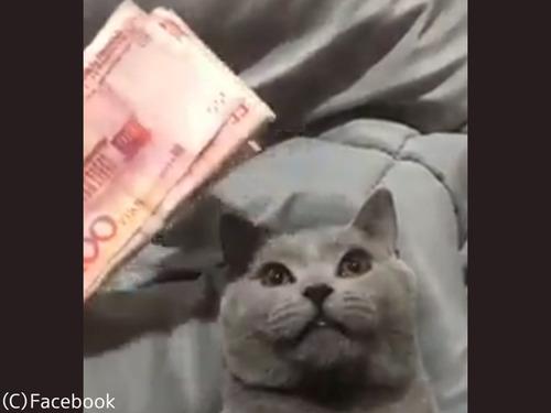 お金を見せると触らせてくれる猫00