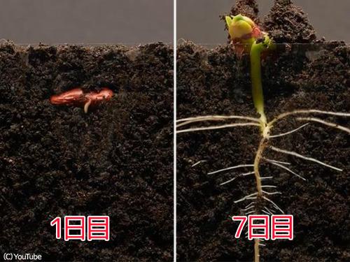 植物タイムラプス00