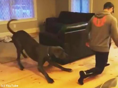 飼い主さんのエクササイズを真似っこする犬00