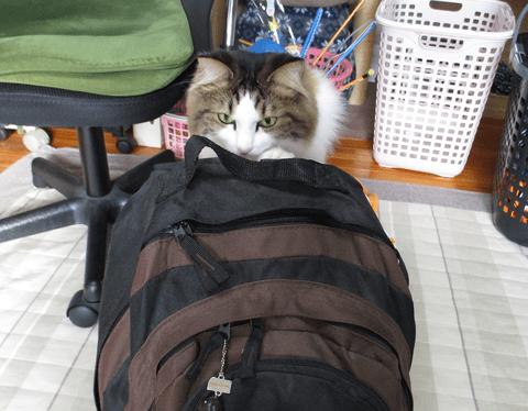 防災袋を点検する猫