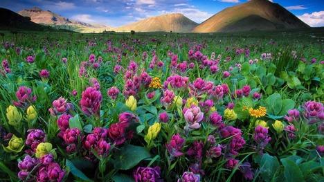 140501咲き誇る高原の花@アメリカ コロラド州