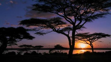 131106アンボセリ湖@ケニア
