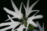 白い小さな花2