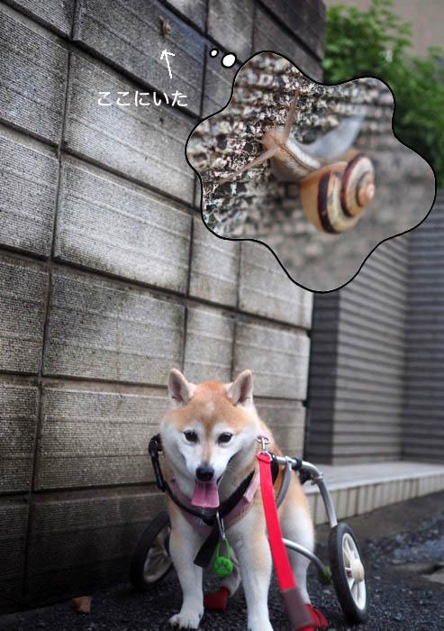9日夕ブログ9