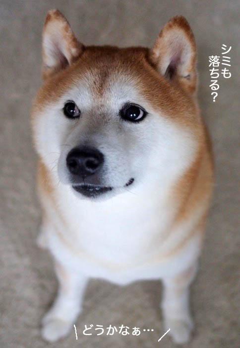 28日夕ブログ7