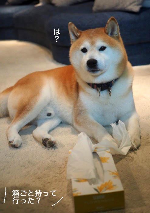 10日夕ブログ9