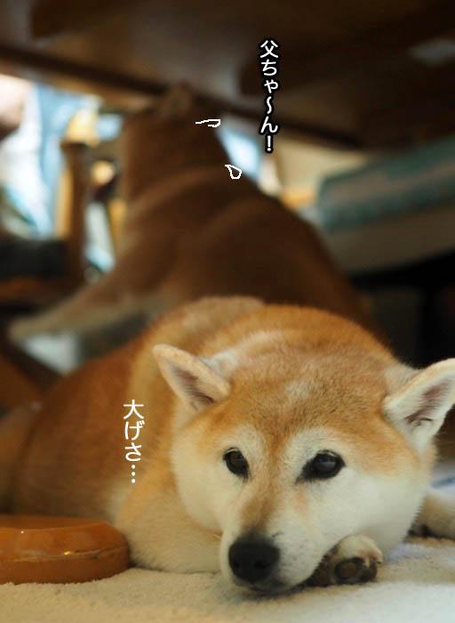 23日夕ブログ5