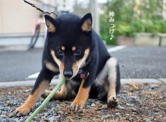 9日夕ブログ7