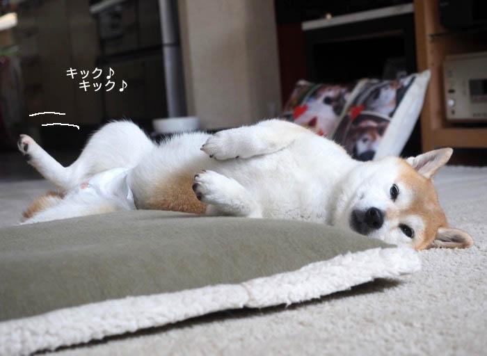6日夕ブログ2