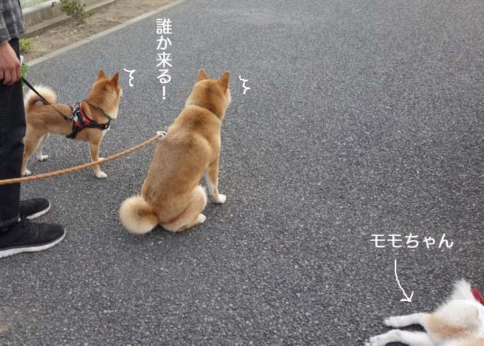 11日夕ブログ5