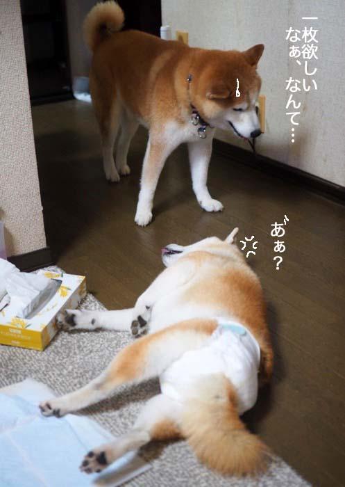 28日夕ブログ4