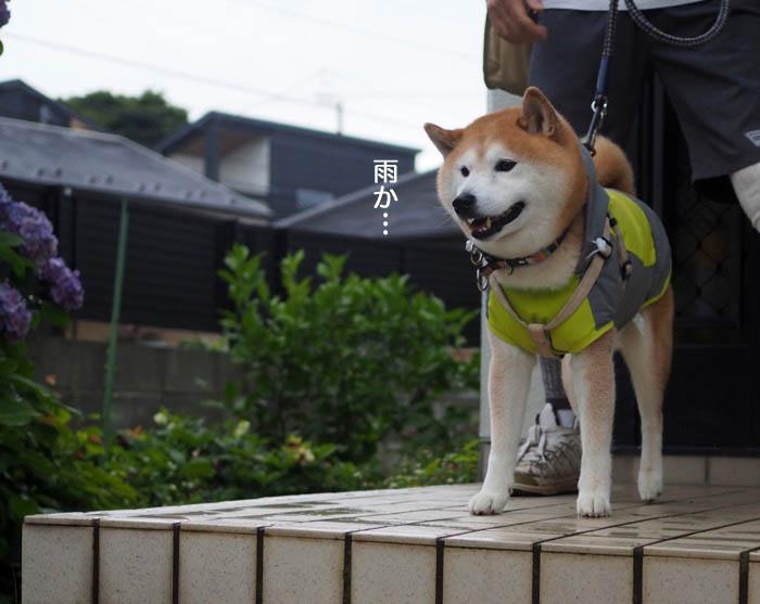 19日夕ブログ10