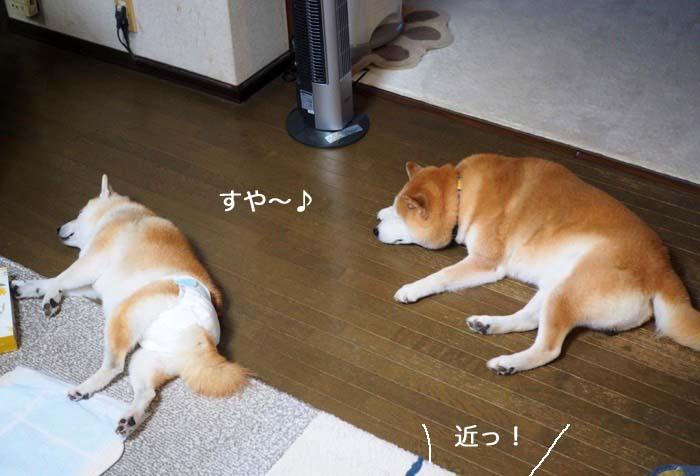 28日夕ブログ11