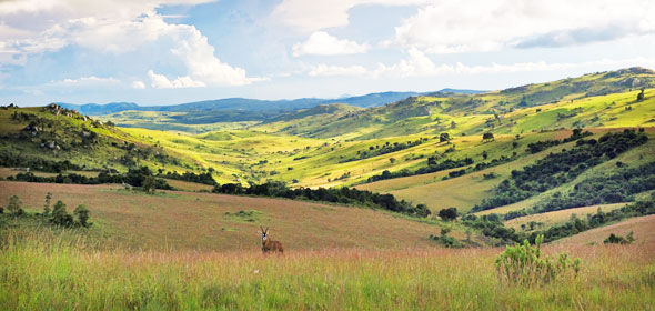 nyika-national-park-landscape-590