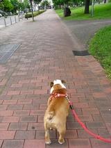 メルすみごこち事務所のシンボル犬、「ブルドッグのメル」