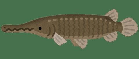 fish_alligator_gar