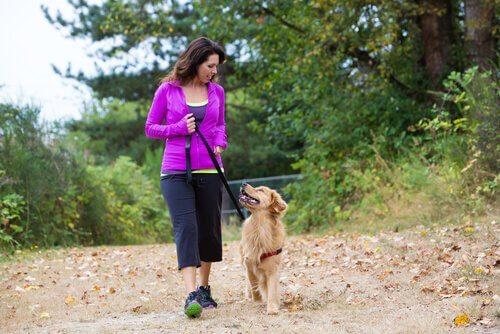 散歩中に飼い主の方をチラチラ見る犬