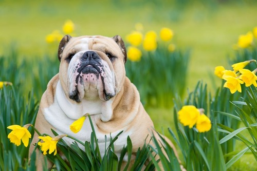 春の訪れを感じるような犬+花の画像14