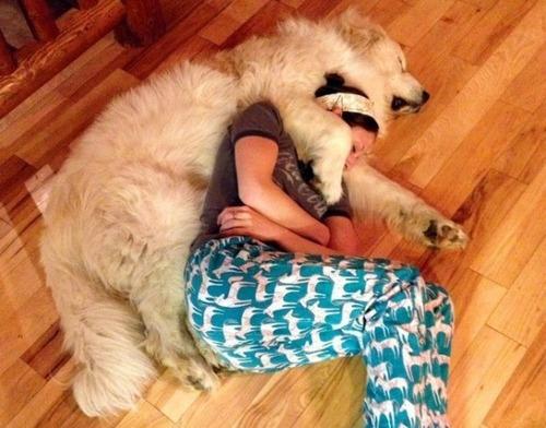 大型犬と寝てるやついる?