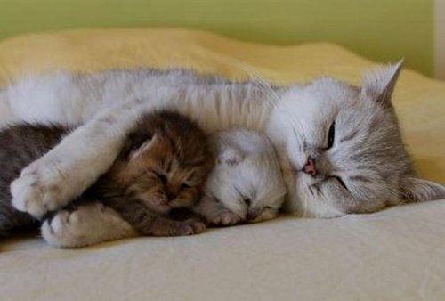 「猫の家族」の画像検索結果