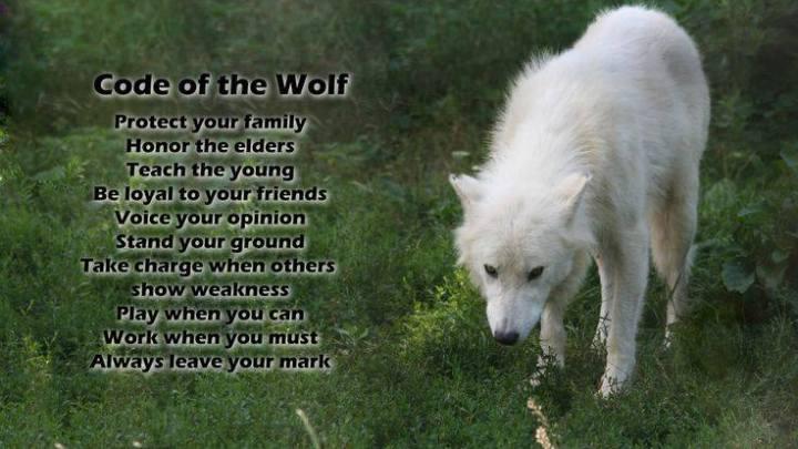 WolfCode