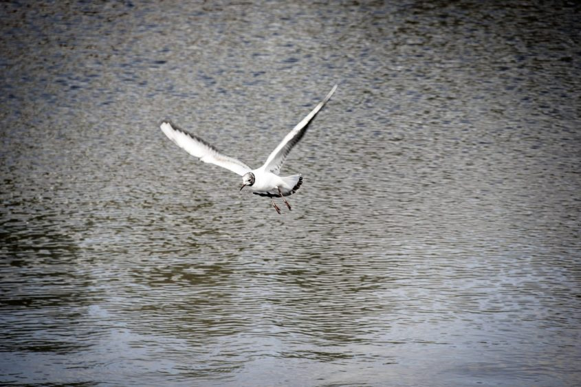 white bird flying over the water during daytime