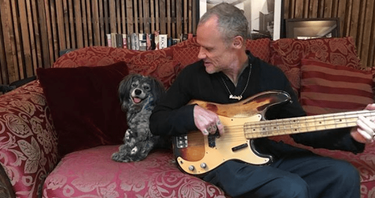 flea, flea bass, flea bass solo, flea book club, flea rhcp, flea youtube