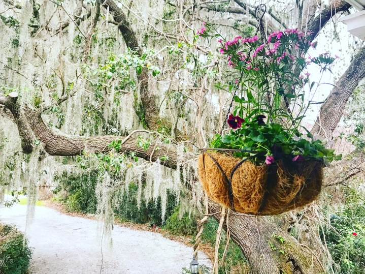 Friday Favorites: Charleston Pictures