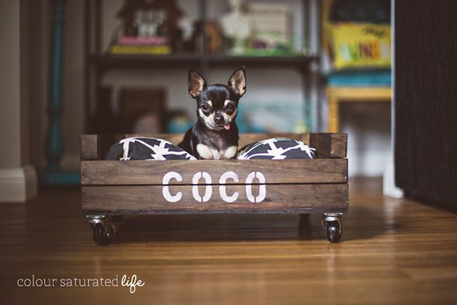DIY Dog Bed by Colour Saturated Life