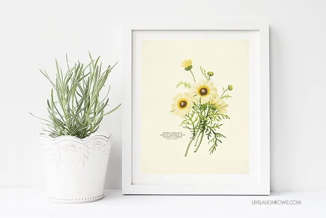 Vintage Botanical Prints are beautiful. Who doesn't love free printable wall art too? These vintage inspired Spring prints would make a great addition to your spring decor by placing them on a table or hanging them on your wall. livealughrowe.com