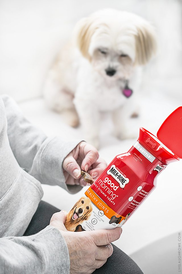 Five great tips to keep your dog in tip-top shape! livelaughrowe.com
