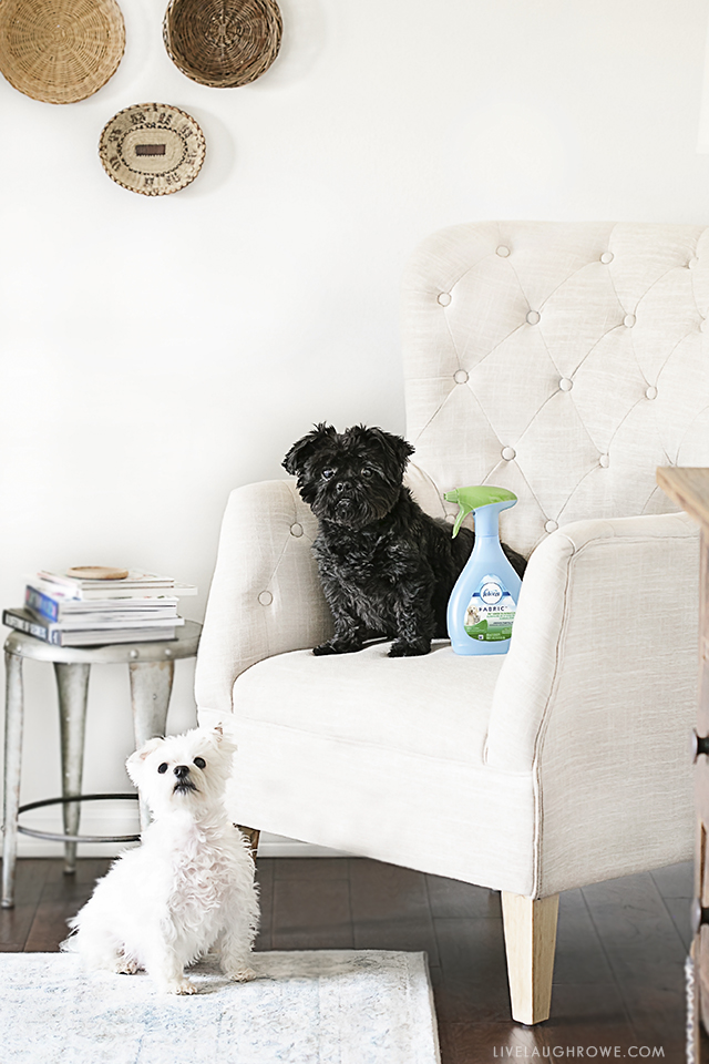 As long time dog owners, I'm sharing some tips on How to Keep Your House Clean with Dogs. More details at livelaughrowe.com.