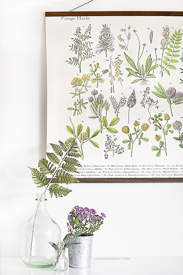 Beautiful Herbs & Spices Poster