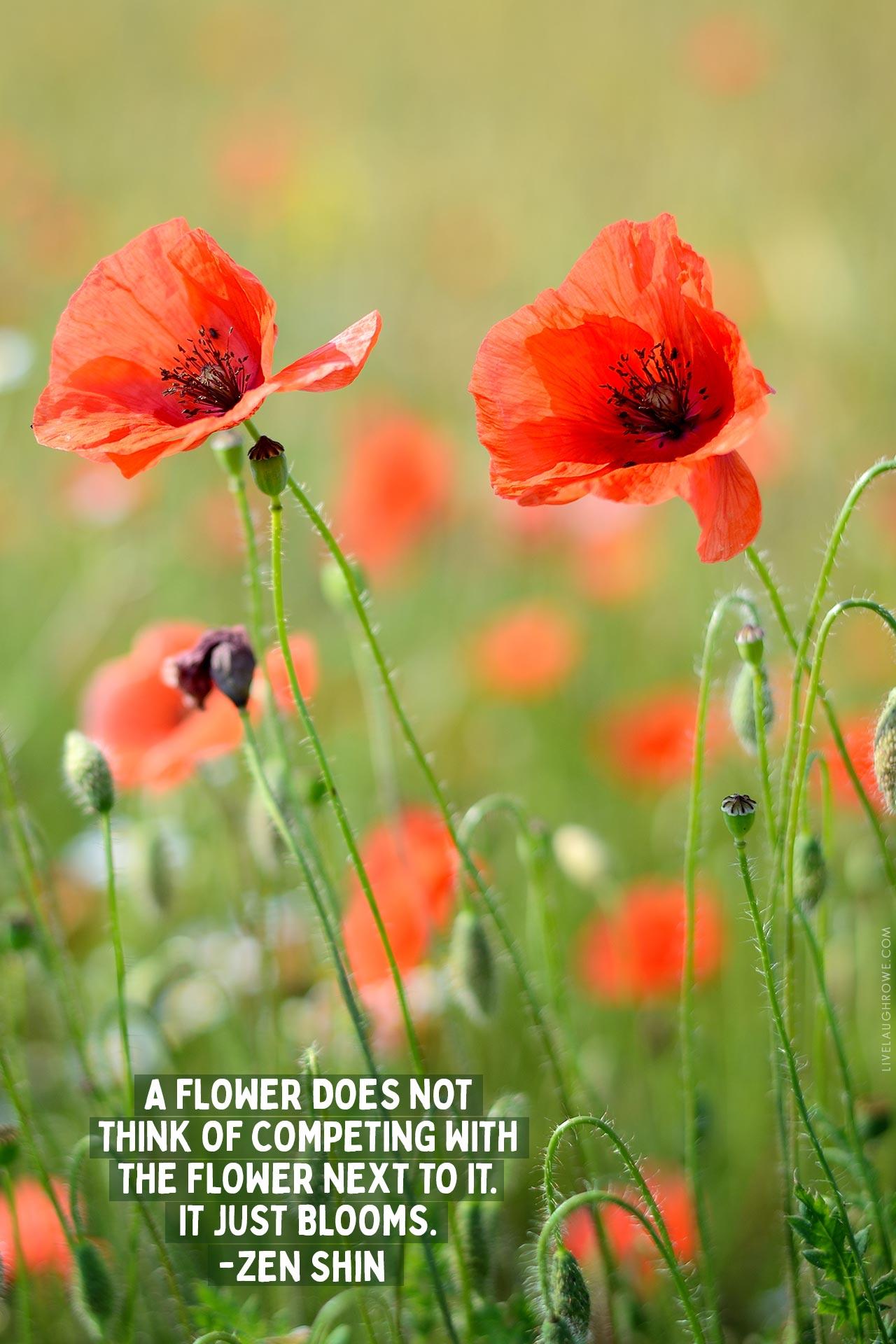 Zen Shin Flower Quote