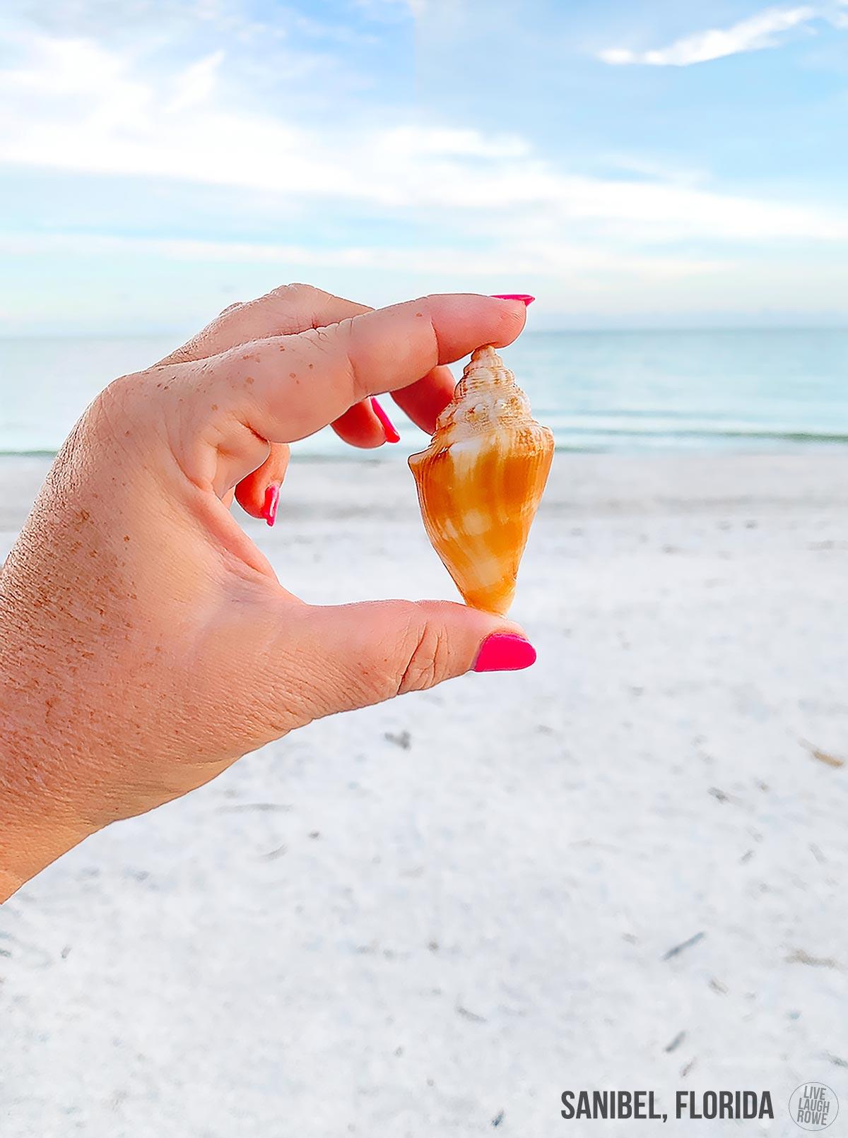 Shelling in Sanibel, FL