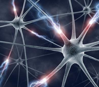 brain-neuroplasticity